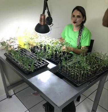 Asesoría técnica - Tomata Cherry - Megaplant Ecuador - Plantas de Tomate Riñón
