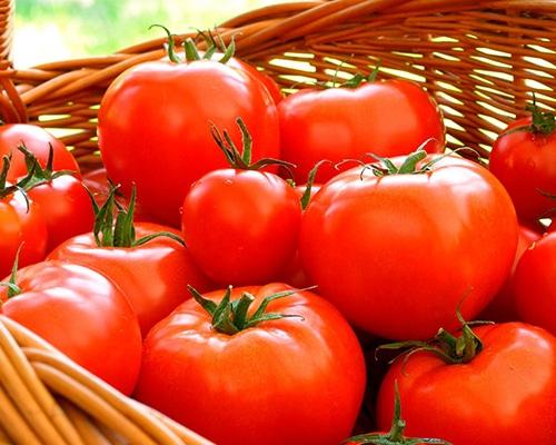 Tomate Eterei - Tomata Cherry - Megaplant Ecuador - Plantas de Tomate Riñón