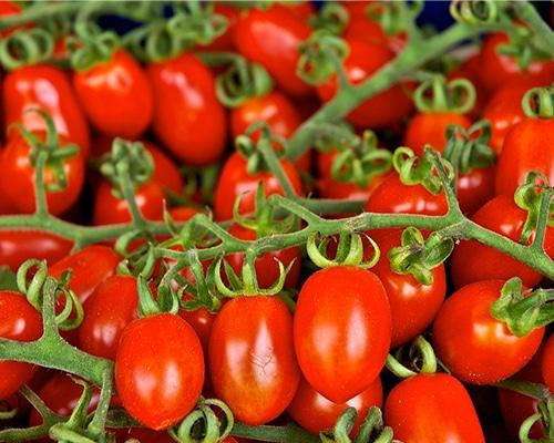 Tomate Cherry - Tomata Cherry - Megaplant Ecuador - Plantas de Tomate Riñón